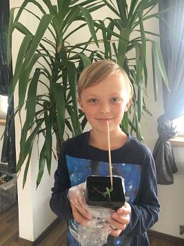 Lennox Sonnenblume©Gretel-Bergmann-Grundschule Eystrup