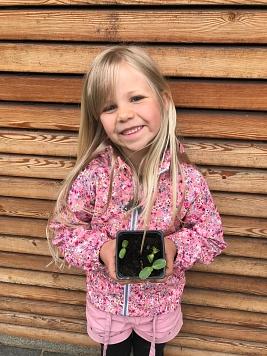 Milaine Sonnenblume©Gretel-Bergmann-Grundschule Eystrup