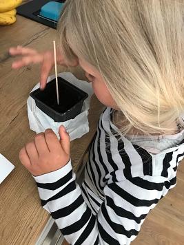 Milaine Sonnenblume 2©Gretel-Bergmann-Grundschule Eystrup