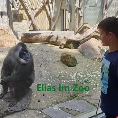 nElias Zoo 1.jpg©Gretel-Bergmann-Grundschule Eystrup